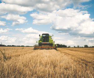 Técnico Agrícola