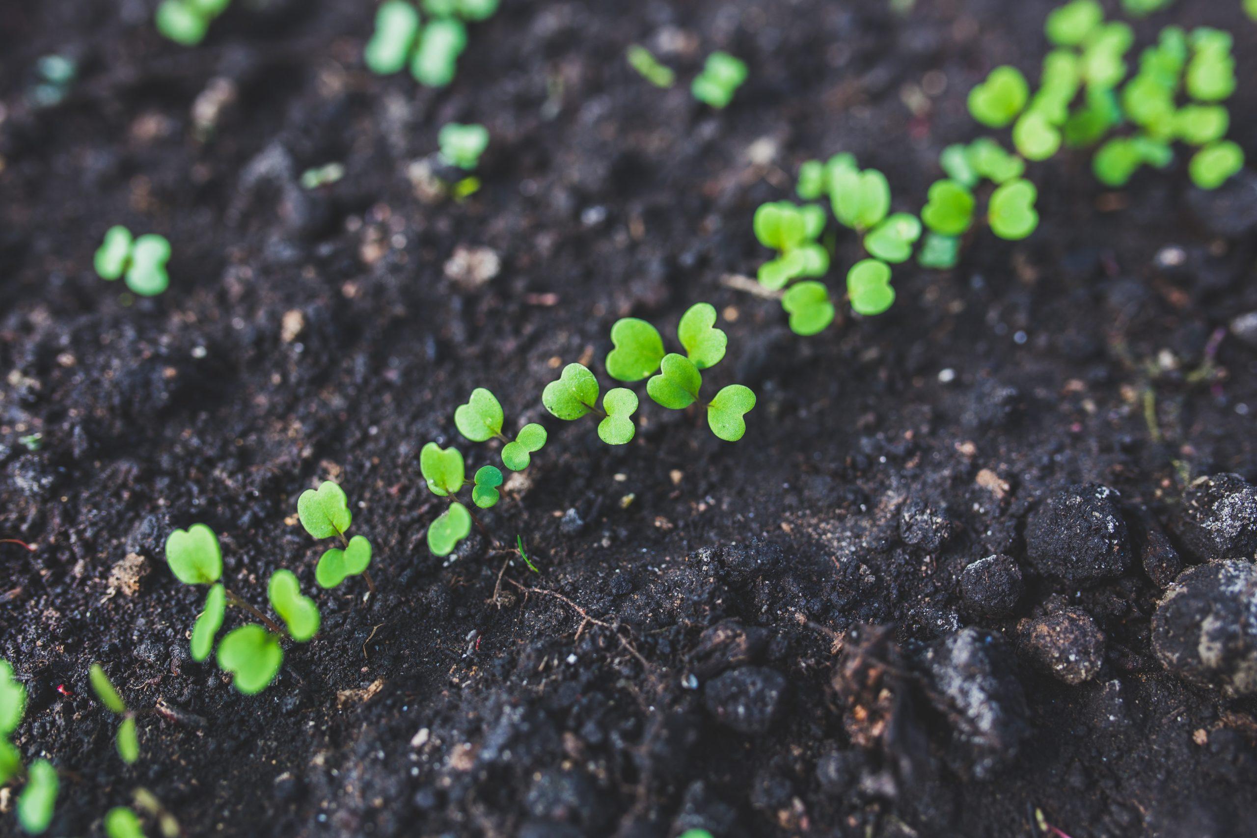 robot duoc uc plantas